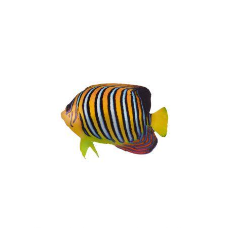 Διακοσμητικό ξύλινο τροπικό ψάρι -angelfish- 20x15cm