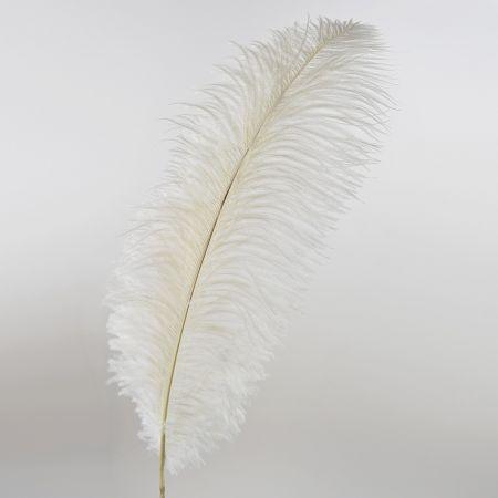 Διακοσμητικό φτερό από στρουθοκάμηλο Λευκό 60cm