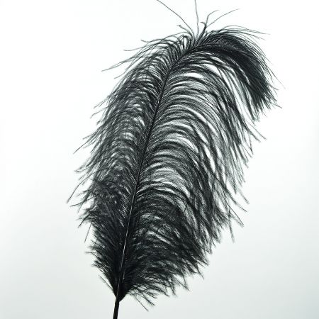 Διακοσμητικό φτερό από στρουθοκάμηλο Μαύρο 60cm