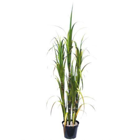 Τεχνητό Φυτό SUGARCANE 180cm