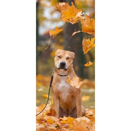 Διακοσμητική αφίσα με σκύλο και Φθινοπωρινά φύλλα 90x200cm