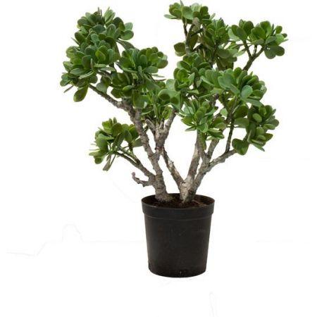 Τεχνητό Φυτό-Κράσουλα (Jade Plant) 56cm