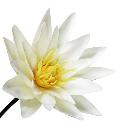 XL Διακοσμητικό λουλούδι Νούφαρο Λευκό 127x50cm