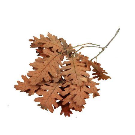 Σετ 400gr Φθινοπωρινά  φύλλα Βελανιδιάς φυσικά Πορτοκαλί