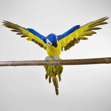 Παπαγάλος με ανοιγμένα φτερά Μπλέ 50cm