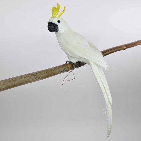 Διακοσμητικός Παπαγάλος Cacatoo Λευκός 50cm