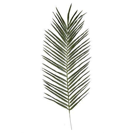 Διακοσμητικό φύλλο φοίνικα , 115cm