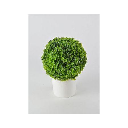 Διακοσμητικό γλαστράκι με φυτό Πυξάρι 18cm