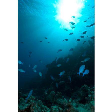 Διακοσμητική αφίσα - Underwater world 150x100 cm