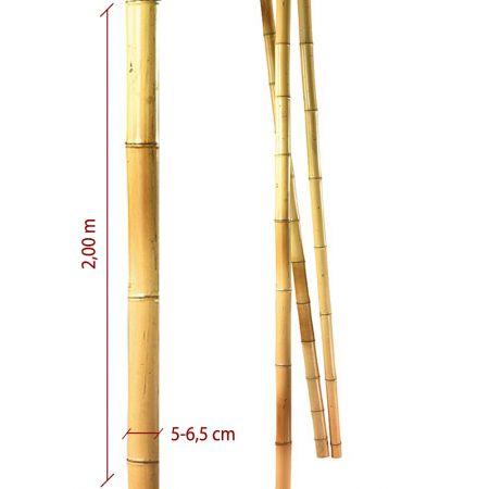 Μπαμπού ιστός - καλάμι Φυσικός 5-6,5cm x 2m