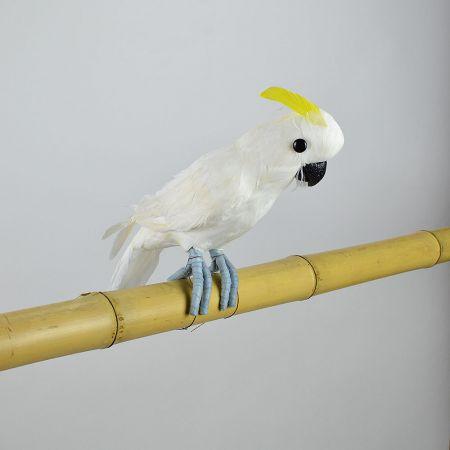 Διακοσμητικός παπαγάλος Κακατούα Λευκός 34cm