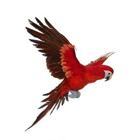 Διακοσμητικός παπαγάλος με ανοιγμένα φτερά Κόκκινος 71cm