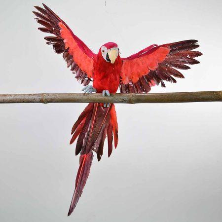 Διακοσμητικός παπαγάλος με ανοιγμένα φτερά Κόκκινος 55cm