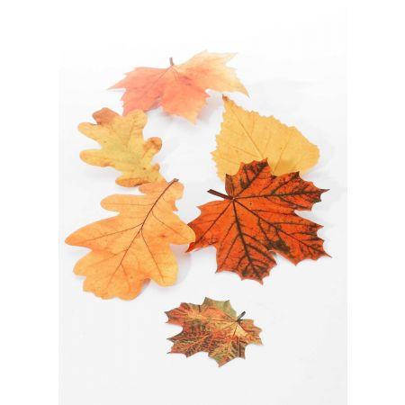 Σετ 6τχ Διακοσμητικά Φθινοπωρινά φύλλα 15-20cm