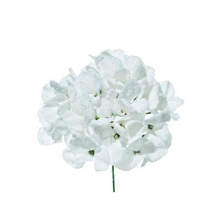 Χριστουγεννιάτικο λουλούδι Ορτανσία Λευκό Χιονισμένο 21cm