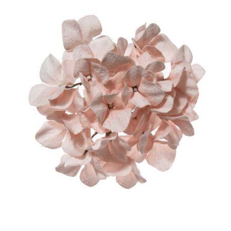 Χριστουγεννιάτικο λουλούδι Ορτανσία Ροζ Χιονισμένο 21cm
