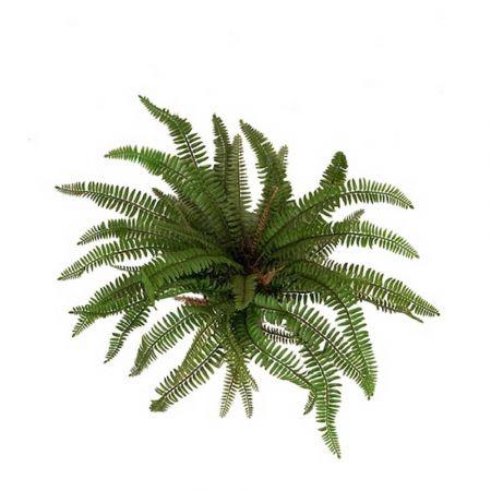 Διακοσμητική δέσμη με φύλλα Φτέρης 40x50cm