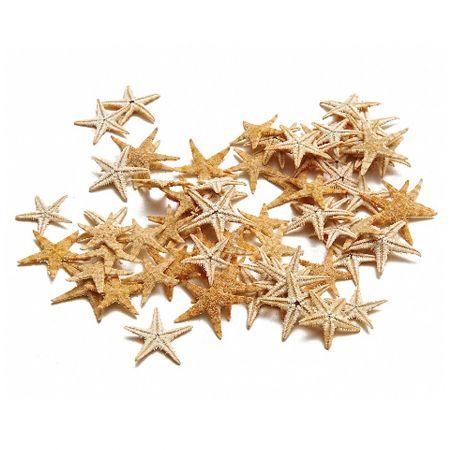 Σετ 100τχ Αποξηραμένοι αστερίες 2-3cm