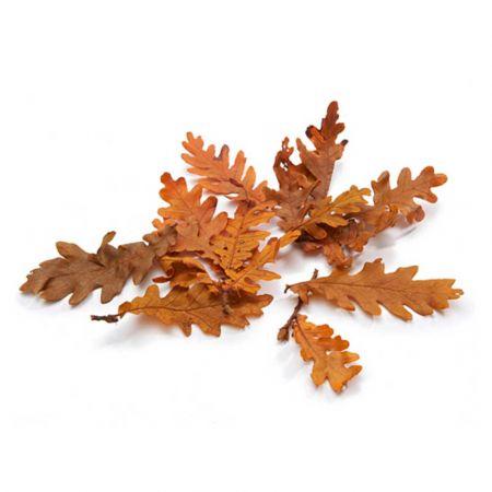 Σετ 150gr Φθινοπωρινά  φύλλα Βελανιδιάς φυσικά Πορτοκαλί 5-10cm