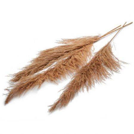 Σετ 3τχ XL Αποξηραμένο Pampas Grass Φυσικό 180cm