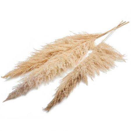 Σετ 3τχ XL Αποξηραμένο Pampas Grass Μπεζ 180cm