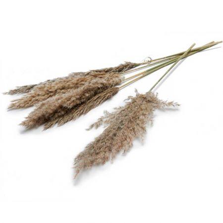 Σετ 6τχ Αποξηραμένο Pampas Grass Φυσικό 70cm