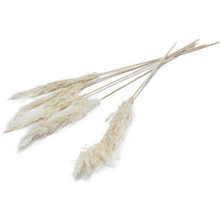 Σετ 6τχ Αποξηραμένο Pampas Grass Εκρού 70cm