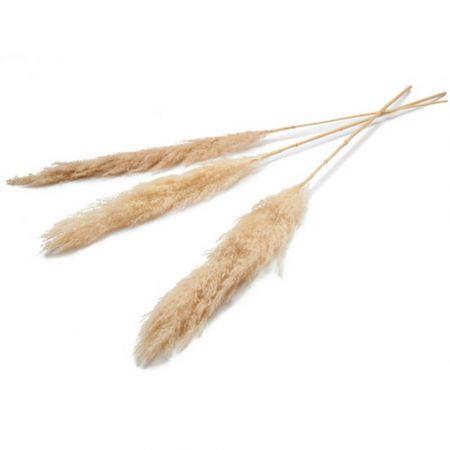 Σετ 3τχ Αποξηραμένο Pampas Grass Μπεζ 150cm