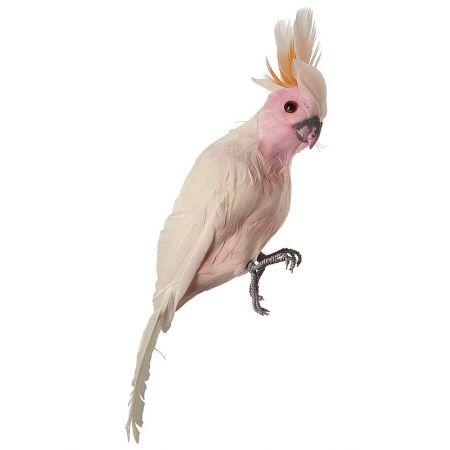 Διακοσμητικός παπαγάλος Κακατούα, Λευκό - Ροζ 31cm