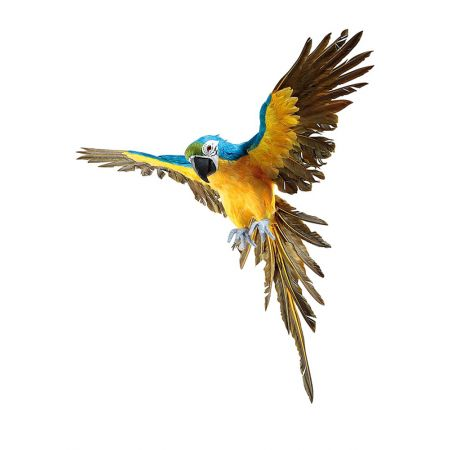 Διακοσμητικός παπαγάλος με ανοιχτά φτερά Μπλε - Κίτρινος 77cm