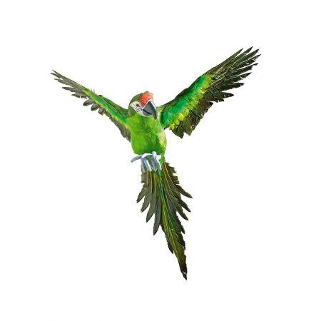 Διακοσμητικός παπαγάλος με ανοιχτά φτερά , 77cm