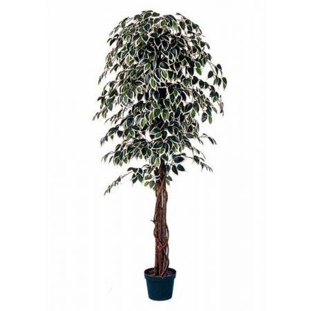 Τεχνητό δέντρο φίκος - Benjamini δίχρωμο σε γλάστρα 180cm