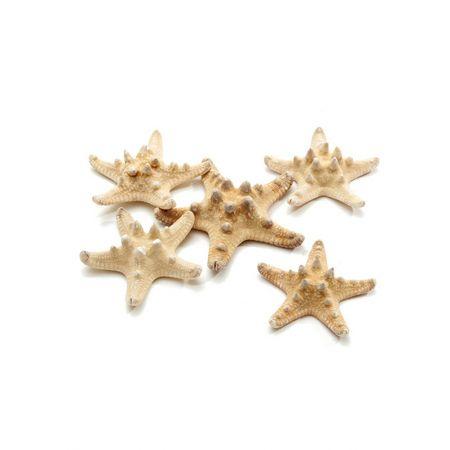 Σετ 25τχ Διακοσμητικοί Φυσικοί αστερίες 5-7cm