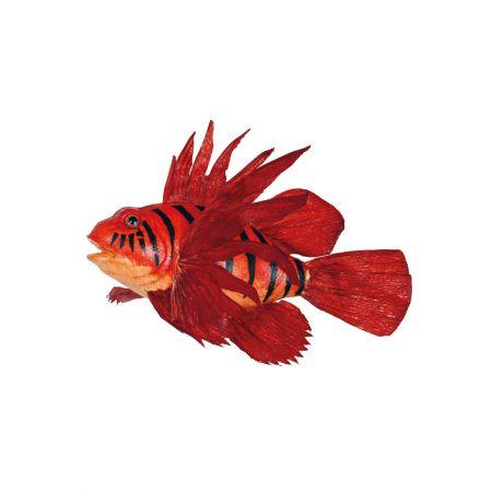 Διακοσμητικό εξωτικό ψάρι - Κόκκινο λιονταρόψαρο 30cm