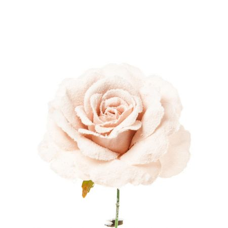 Tριαντάφυλλο χιονισμένο Ροζ, 23cm