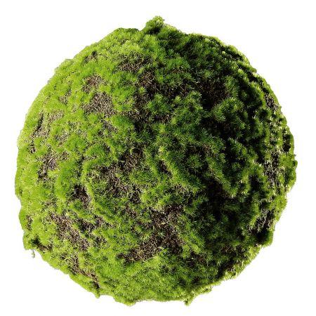 Διακοσμητική μπάλα με γρασίδι - βρύα 28cm