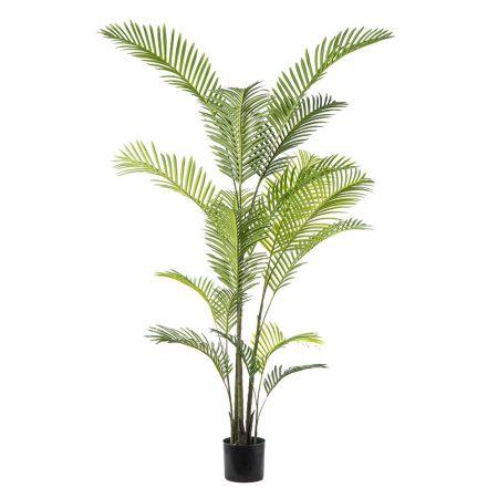 Φυτό-Φοίνικας ARECA σε γλάστρα 190cm