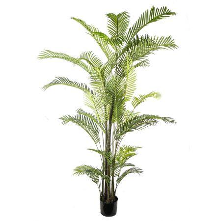 Φυτό-Φοίνικας ARECA σε γλάστρα 270cm