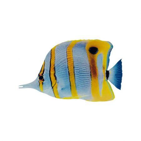 Διακοσμητικό ξύλινο τροπικό ψάρι -butterfly fish- 20x12cm
