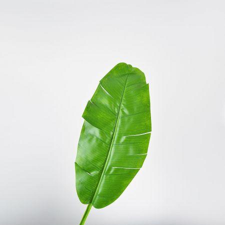 Διακοσμητικό φύλλο μπανανιάς Πράσινο 27x90cm