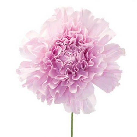 XL Διακοσμητικό λουλούδι - άνθος foam Λιλά 80x60cm