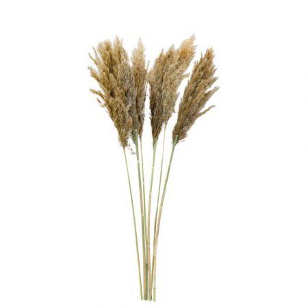 Σετ 6τχ Αποξηραμένο Pampas Grass Φυσικό 65-75cm