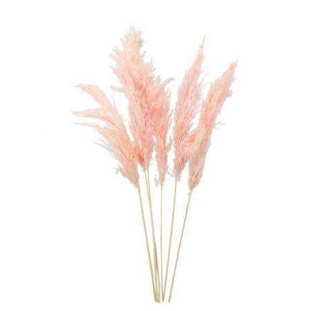 Σετ 6τχ Αποξηραμένο Pampas Grass Ροζ 65-75cm