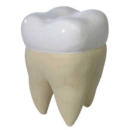 XL Διακοσμητικό δόντι Φρονιμίτης 35x25x25cm
