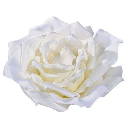 XXL διακοσμητικό άνθος τριαντάφυλλου Λευκό 40cm