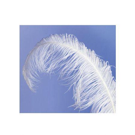 Διακοσμητικό φτερό από στρουθοκάμηλο 50-60 cm