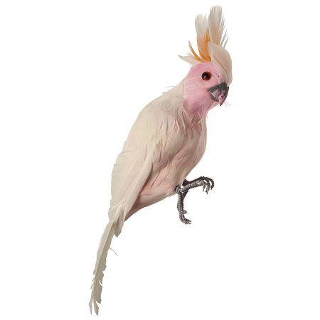 Διακοσμητικός παπαγάλος Κακατούα Λευκό - Ροζ 31cm