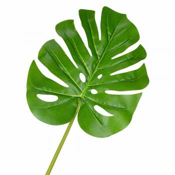 Εξωτικά φύλλα