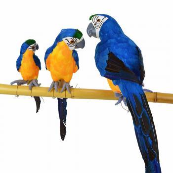 Διακοσμητικοί παπαγάλοι