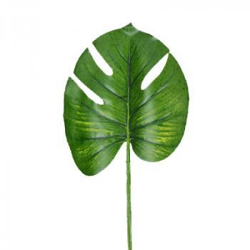 Φύλλα Μονστέρα - Πλατύφυλλα